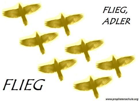 Flieg, Adler, flieg!