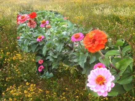 Du bist Gottes wunderschöne Blume!