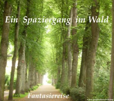 Spaziergang im Wald
