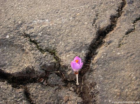 Bildbetrachtung Blume Beton_3776