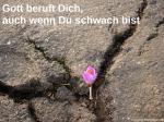 Krokus Beton Risse Boden