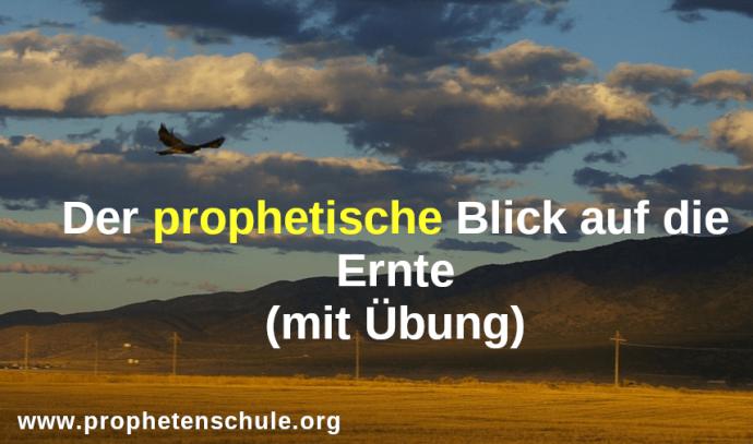 Adler fliegt über Kornfeld - Ernte - mit Text - Der prophetische Blick auf die Ernte (mit Übung) in 16:9